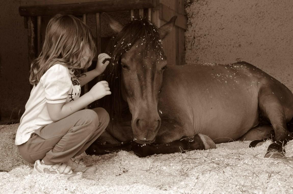 Konjičkove urice - individualno Darilni boni