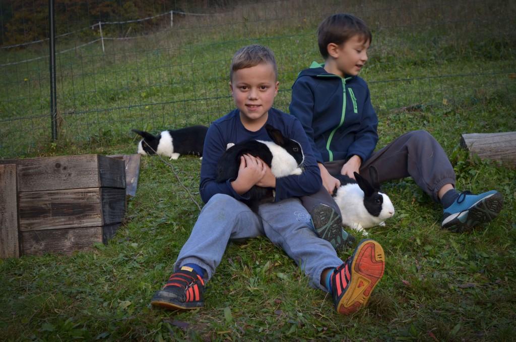Z zajčki
