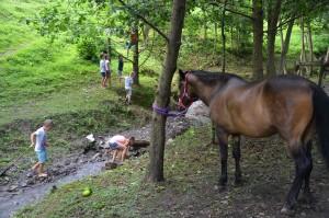 v-potočku-s-konji